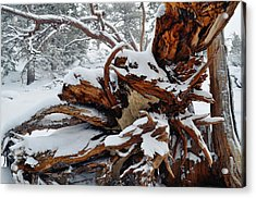 Acrylic Print featuring the photograph San Jacinto Fallen Tree by Kyle Hanson