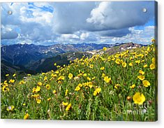 Acrylic Print featuring the photograph San Juan Summer by Kate Avery
