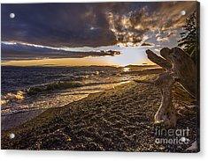 San Juans Majestic Driftwood Acrylic Print