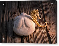 Sand Dollar And Seahorse Acrylic Print by Garry Gay