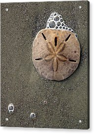 Acrylic Print featuring the photograph Sand Dollar by Tom Romeo