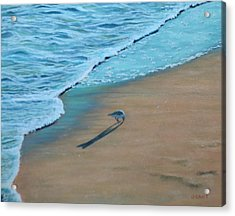 Sand Piper Acrylic Print by Joanne Grant
