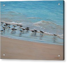 Sand Piper On Parade Acrylic Print