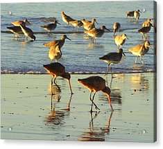 Sand Pipers Acrylic Print