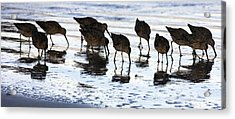 Sand Pipers Reflected Acrylic Print