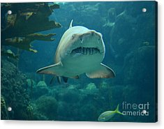Acrylic Print featuring the photograph Sand Shark by Robert Meanor