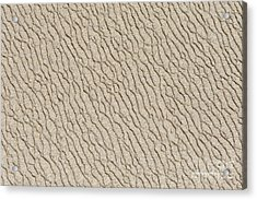 Sand Skin Acrylic Print by Artist and Photographer Laura Wrede