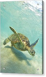 Sand Surfing Acrylic Print by James Roemmling