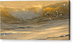 Sanderlings Acrylic Print