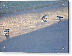 Sanderlings At Dusk I  Acrylic Print