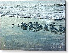 Sanderlings Acrylic Print by Nur Roy