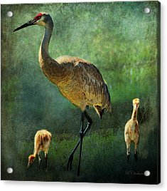 Sandhill And Chicks Acrylic Print