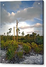 Sandhill And Clouds II. Lake Lizzie Preserve. Acrylic Print