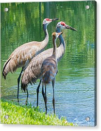 Mom Look What I Caught Acrylic Print by Susan Molnar