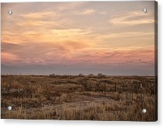 Sandhill Cranes At Sunset Acrylic Print