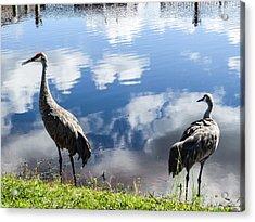Sandhill Cranes At The Lake II Acrylic Print