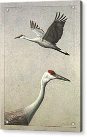 Sandhill Cranes Acrylic Print by James W Johnson