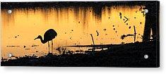 Sandhill Sunrise Acrylic Print