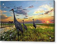 Sandhill Sunset Acrylic Print by Debra and Dave Vanderlaan