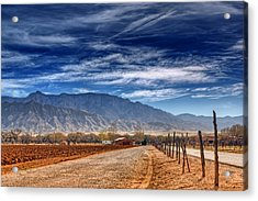 Sandias In My Backyard Acrylic Print