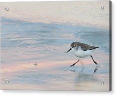 Sandpiper 1 Acrylic Print