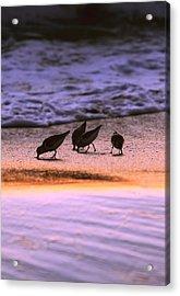 Sandpiper Morning Acrylic Print