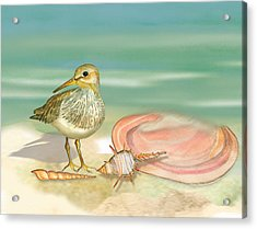 Sandpiper On Beach Acrylic Print by Anne Beverley-Stamps