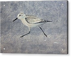 Acrylic Print featuring the painting Sandpiper by Stan Tenney