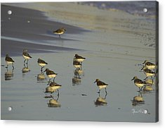 Sandpiper Sunset Reflection Acrylic Print by Susan Molnar