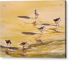Sandpipers 5 Acrylic Print