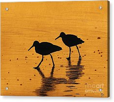 Sandpipers - At - Sunrise Acrylic Print by D Hackett