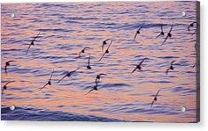 Sandpipers At Sunset Acrylic Print by John Wartman