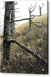 Acrylic Print featuring the photograph Sandy Hillside by Adria Trail