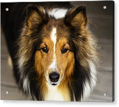 Sandy The Perfect Model Acrylic Print