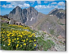 Acrylic Print featuring the photograph Sangre De Cristos Crestone Peak And Wildflowers by Cascade Colors