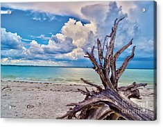 Acrylic Print featuring the photograph Sanibel Island Driftwood by Timothy Lowry