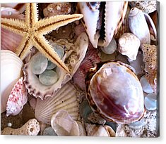 Sanibel Shells Acrylic Print by Colleen Kammerer