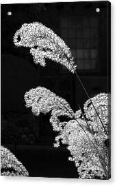 Santa Fe Feather Duster Acrylic Print