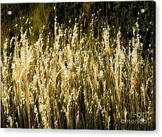 Santa Fe Grasses Acrylic Print