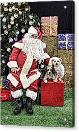 Santa Paws  Acrylic Print by Helen Akerstrom Photography