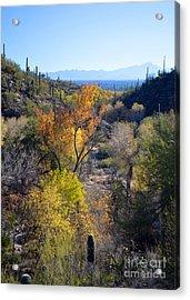 Santa Ritas From Sabino Canyon Acrylic Print