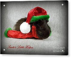 Santa's Little Helper Acrylic Print by Renee Trenholm