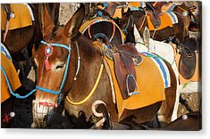 Santorini Donkeys Ready For Work Acrylic Print