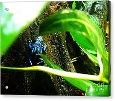 Acrylic Print featuring the photograph Sapo by Vanessa Palomino