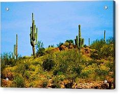 Sargaro Cactus And Flowers Acrylic Print by Richard Jenkins