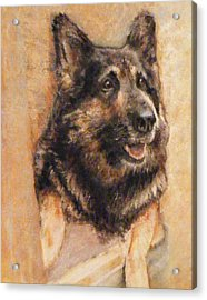 Sasha German Shepherd Acrylic Print by Richard James Digance