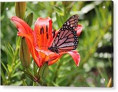 Saskatchewan Prairie Lily And Butterfly Acrylic Print