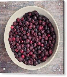 Saskatoon Berries Acrylic Print by Priska Wettstein