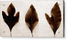 Sassafras Leaves In Sepia Acrylic Print by Michelle Calkins
