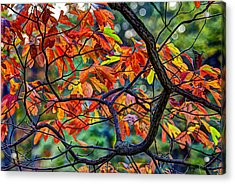 Sassafras Leaves Acrylic Print by Skip Tribby